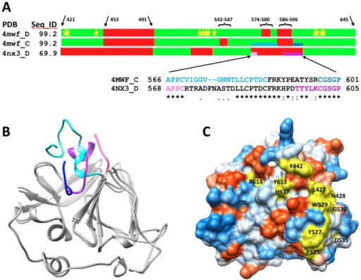 Comparison of structural templates used for modeling the HCV E2c protein.(A) Bar representation of E2 sequence showing the structural similarities between crystal structures 4MWF chains C and D (E2c structure, genotype 1a), and 4NX3 chain D (genotype 2a). Regions reported in the coordinates span amino acid residues from H421 to N645. The percent sequence identities between amino acid sequences taken from coordinates and corresponding sequence fragments from HCV E2 protein of genotype 1a are shown in the column Seq_ID. In green are colored regions where structural deviations are below 3 Ångstroms measured as Cα-Cα distances between corresponding residues from the superimposed structures. In red are regions where structural data is missing or deviations are greater than 3 Angstroms. The locations of amino acid residues that have been reported to be important for E2 binding to CD81 are marked with yellow stars. (B) Structural superposition of 4mwf_C and 4nx3_D shows strong conformational similarities between experimentally solved structures of E2 proteins for which the level of sequence identity is 69%. In blue and purple are colored structural fragments where two structures 4mwf_C (566–601; Blue: light-dark) and 4nx3_D (568–605; Purple: light-dark) significantly differ. (C) Surface presentation of the 4mwf_D structure showing the amino acid residues identified to be important for E2 binding to CD81 (yellow). The other amino acid residues are color coded with the most hydrophilic residues being colored blue, the most hydrophobic residues colored red orange, and intermediate residues colored white.