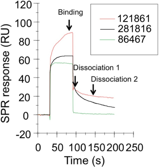 Surface plasmon resonance sensorgrams of ligands binding to recombinant E2 protein (Biacore T100).This figure shows sensorgrams (binding and dissociation plots) for three of the ligands that bound to the recombinant E2 protein immobilized on a CM5 chip, 281816 (black), 86467 (green) and 121861 (red), and the three reference points that are used to measure the binding and dissociation (dissociation 1 and dissociation 2) of the compound expressed in response units (RU).
