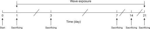The time-line of the experiments as described in the text.