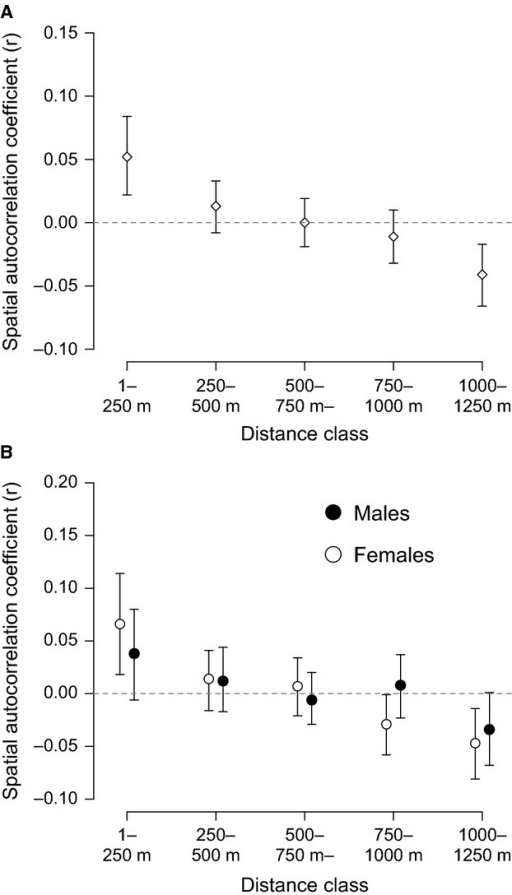Population spatial genetic structure for 78 dominant (breeding) white-browed sparrow weavers from 39 social groups alive on 1 January 2011: (A) with both sexes combined and (B) calculated separately for each sex. Points represent the mean genetic spatial autocorrelation coefficient for that distance class. Error bars represent 95% confidence intervals around the mean estimate by bootstrapping. Error bars that do no overlap zero represent significant genetic structure.