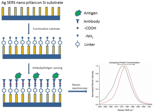 Functionalization of a Ag nanopillared substrate with linker and covalently bound antibody. With increasing amounts of target antigen, we observe a shift in the CS peak to longer wavenumbers and a corresponding decrease in the FWHM, resulting from increased mechanical stress in the system.