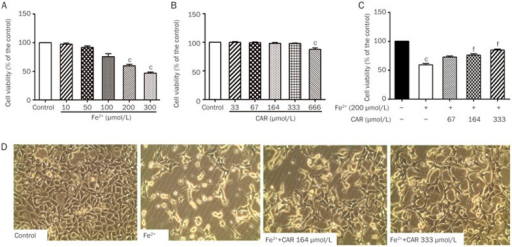The protective effects of carvacrol against Fe2+-induced cytotoxicity in SH-SY5Y cells. (A) SH-SY5Y cells were treated with different concentrations of Fe2+ (10, 50, 100, 200 or 300 μmol/L) for 24 h, and cell viability was estimated using CCK-8 assays. (B) SH-SY5Y cells were treated with different concentrations of carvacrol (33, 67, 164, 333 or 666 μmol/L) for 24 h. Cell viability was estimated using CCK-8 assays. (C) Cells were pretreated with 67, 164 or 333 μmol/L carvacrol for 2 h and then incubated with 200 μmol/L Fe2+ for 24 h. (D) Cells were pretreated with 164 or 333 μmol/L carvacrol for 2 h prior to treatment with Fe2+ (200 μmol/L) for 24 h, and then morphological changes were analyzed (200×). CAR, carvacrol. Mean±SD (n=3). cP<0.01 vs the untreated control; fP<0.01 vs the Fe2+-treated group.