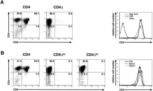 Flow cytometric analysis of thymocytes from wild-type CD4Tg+ Rag2−/− and tailless CD4Δ Rag2−/− transgenic mice. (A) Representative  fluorescence staining profiles of CD4 and CD8 are shown for thymocytes from age matched CD4Tg+ Rag2−/− mice (CD4, left panel) or tailless CD4  (CD4Δ, middle panel) Rag2−/− mice (n = 6). A single parameter histogram better shows the relative levels of CD4 expression (right panel) for these mice  as compared to a transgene negative littermate control of CD4Δ (Neg. Cont.). (B) A similar immunofluorescense analysis is shown for thymocytes from a  CD4Tg+ Rag2−/− mouse (left panel), and two of seven CD4Δ Rag2−/− positive progeny from a CD4Δ × CD4Δ mating (middle two panels). Two parameter fluorescence profiles are shown for wild-type CD4Tg+ and the mice expressing the lowest (CD4Δlo) and highest (CD4Δhi) level of CD4Δ in the litter. The relative levels of CD4 expression are again shown by a single parameter histogram (right panel). The percentage of cells in each population is indicated. While some CD4Δ Rag2−/− mice (7/21 analyzed) contained a very small fraction of CD8+CD25− thymocytes (1–2%), this did not correlate  with the level of CD4Δ expression. The relative percentage of CD8+CD25− thymocytes in wild-type CD4 Rag 2−/−/CD4Δ Rag 2−/− mice was >50fold.