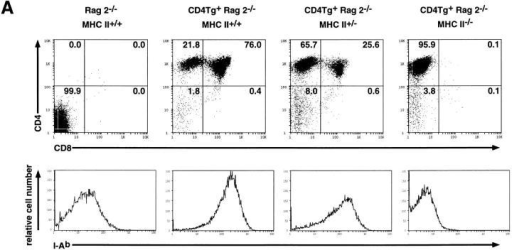 Flow cytometric analysis of thymocytes from CD4Tg+ Rag2−/−  mice mated onto an MHC class II−/− background. (A) Fluorescence staining profiles of CD4 and CD8 (top panels) or the MHC class II molecule I-Ab (bottom panels)  of thymocytes from a CD4 transgene negative MHC class II wild-type control  (Rag2−/− MHC II+/+) and CD4 transgene positive littermates that are wild-type  (CD4Tg+ Rag2−/− MHC II+/+), heterozygous (CD4Tg+ Rag2−/− MHC II+/−) or   (CD4Tg+ Rag2−/− MHC II−/−) for MHC class II expression. The percentage  of cells in each population is indicated. Unlike thymi from CD4Tg+ Rag2−/−  mice that were first analyzed (Fig. 1), thymi from the crosses of CD4Tg+ Rag2−/−  mice with MHC class II−/− mice did not exhibit an increase in cell number relative to CD4 transgene negative littermates. This was observed even in CD4Tg+  Rag2−/− MHC class II+/+ progeny of MHC class II heterozygote crosses. This is  likely due to nonspecific changes in genetic background. (B) Scatter graph of the  percentage of CD4+CD8+ thymocytes from the progeny of CD4Tg+ Rag2−/− ×  MHC class II−/− matings. Each circle shows a data point from an individual  mouse, with the mean represented by a bold plus sign (+). The number of mice  analyzed for each type is indicated across the top of the graph. CD4 transgene  negative littermate controls (LMC) included MHC class II , heterozygous  and wild-type mice.