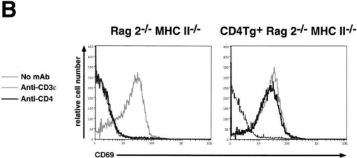 Flow cytometric  analysis of thymocytes from control and CD4Tg+ Rag2−/− MHC  class II−/− littermates treated  with anti-CD3ε or anti-CD4  mAb. (A) 4-wk-old mice were  treated intraperitoneally with 100  μg of the anti-CD3ε mAb 2C11  (top panels), or 20 μg of the antiCD4 mAb GK1.5 (bottom panels).  After 4 d, thymocytes were  stained and analyzed by flow cytometry using anti-CD4-PE and  anti-CD8-FITC. Identical results  were obtained for CD4Tg+  Rag2−/− MHC II−/− mice  treated with 100 μg or 500 μg  GK1.5. The percentage of cells  in each population is indicated.  Total thymocyte numbers were  as follows: anti-CD3ε–treated  Rag2−/− MHC II−/− (1.2 × 107)  or CD4 Rag2−/− MHC II−/−  mice (3.2 × 107). (B) Single parameter fluorescence histograms  show CD69 expression 20 h after treatment with 150 μg of  mAb 2C11 (gray line) or GK1.5  (thick black line) as compared to  untreated controls (thin black  line).