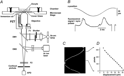 system for rapid confocal scanning along the z axis of