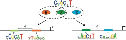 Dyad-dependent modes of regulation. A TF A with DNA binding specificity a may bind subtypes, a1 and a2, of binding sites depending on whether they co-occur with binding sites b and c of cofactors B and C, respectively. Alternatively, a TF that binds as a dimer may bind dyads a1:b or a2:c depending on the sets of downstream targets and/or vice versa. Finally, two distinct TFs with highly similar but distinct binding sites a1 and a2, may recognize and bind their respective TFBSs by associating with corresponding cofactors B and C, respectively. Logos represent the consensus motifs of the TFs and d is the maximum inter-site distance.