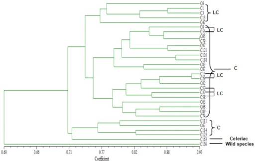 Similarity relationships of 31 different accessions of A. graveolens based on 28 EST-SSR loci.LC: local celery; C: celery.