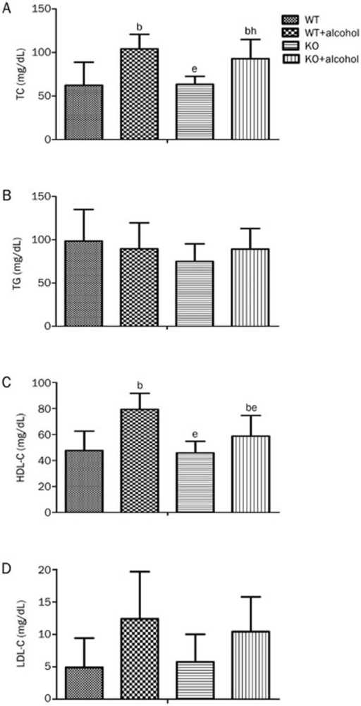Effect of ALDH2 deficiency on blood lipid post-alcohol consumption. All mice were fasted overnight, and serum after 4 weeks of 18% alcohol consumption was collected. (A, B, and C) The serum TC, TG, and HDL-C levels were measured as described in the methods. (D) The LDL levels were calculated using the Friedwald formula. n=7 for each group. Mean±SEM. bP<0.05 vs WT. eP<0.05 vs WT+Alcohol. hP<0.05 vs KO.