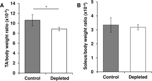 Effect of vitamin D depletion ontibialis anteriororsoleus/body weight ratio. On the day of euthanasia, tibialis anterior (TA) (A) and soleus(B) of control and depleted rats were removed and weighed. TA or soleus/body weight ratio was calculated for each rat (n = 7 for control group and n = 9 for depleted group). TA/body weight ratio decreased in vitamin D-depleted old rats compared to control rats, whereas soleus/body weight ratio remained stable. Data presented are means ± SEM; *p < 0.05.