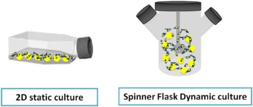 The 2D static culture versus 3D dynamic culture in a spinner flask.2D: two-dimensional; 3D: three-dimensional.