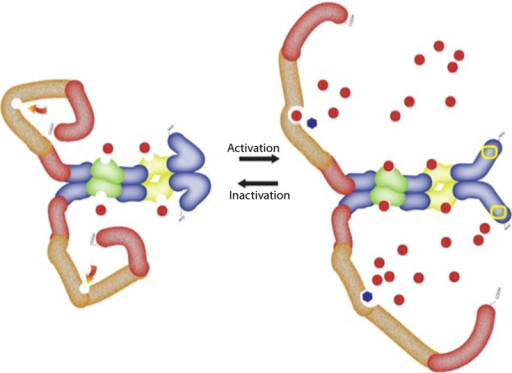 The dynamic conformational changes of the PDE5 showing active and inactive form. For full details see text. The structure of the PDE5 as explained in Figure 5. The red dots represent cGMP and black dots represent PDE5 inhibitor.