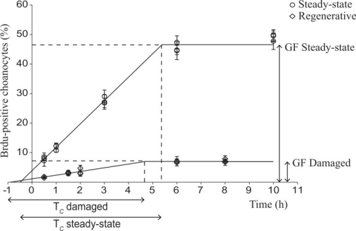 Choanocyte cell kinetics in early regenerative and steady-state tissue of H. caerulea.Steady-state data were obtained from De Goeij and colleagues (2009). In both tissues, the percentage of BrdU-positive choanocytes (mean ± SE) increased over time until a maximum was reached, representing the growth fraction (GF), i.e., the percentage of choanocytes involved in proliferation. The growth fraction of choanocytes in early regenerative tissue was substantially lower than the growth fraction of choanocytes in steady-state tissue. The duration of the linear increase represents the length of the cell cycle, which was similar in regenerative and steady-state sponges. The lines are the least squares fit obtained using the conditions of the 'one population model' described by Nowakowski and colleagues (1989).