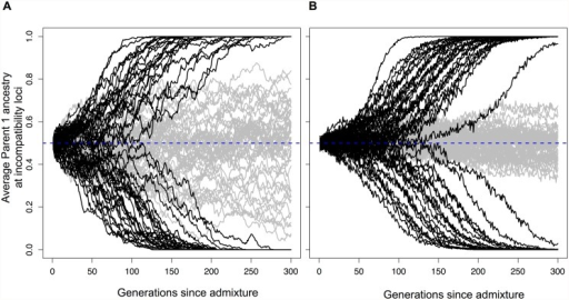 Hybrid populations rapidly fix for hybrid incompatibility locus pairs.Selection drives hybrid incompatibility loci to fixation, even when a hybrid population forms at equal admixture proportions (f = 0.5). Black lines show average parent 1 ancestry at a hybrid incompatibility pair (h = 0.5, s = 0.1) in 50 replicate populations of (A) N = 1,000 or (B) N = 10,000 diploid individuals. Gray lines show results for this same population size with no selection. Because of this behavior, two incompatibility pairs may fix for opposite parents, resulting in reproductive isolation of hybrids from both parents (see Fig. 1).