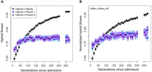 Hybrid populations rapidly develop reproductive isolation from both parental species, even in the presence of migration.Once hybrid populations diverge in ancestry at hybrid incompatibility loci from parental populations, individual hybrids have higher fitness on average when they mate with other hybrids in their population compared to either parent. (A) No migration and (B) ongoing migration (4Nm1 = 4Nm2 = 8) from parental populations. Dark points represent the mean fitness, and smears represent the means of 1,000 bootstrap samples. In B, fitness is normalized to the mean fitness of individuals in the parental populations. Simulation parameters: 100 replicates per time point, N = 1000, 20 hybrid incompatibility pairs, s1, s2 and h drawn from distributions (exponential, exponential and uniform, respectively, see details S5 Text).