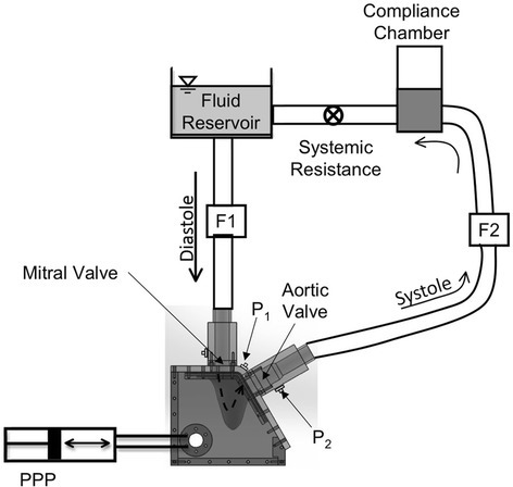 Schematic of the in vitro LV flow circuit. The LV physical model is enclosed within an acrylic box filled with water-glycerin solution. Expansion and contraction of the flexible-walled LV model is accomplished via periodic pressure fluctuations of the enclosing fluid using a programmable piston pump (PPP). Flow probes F1 and F2 are used to measure mitral and aortic flow rates, respectively. Measurement locations of two transducers for measurement of LV (P1) and aortic pressures (P2) are indicated. St. Jude Regent BMHVs were used in the mitral and aortic valve positions. The flow direction through the LV model is indicated using a dashed arrow.