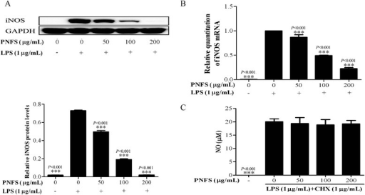 PNFS significantly inhibited the iNOS gene overexpression, but did not affect iNOS enzymatic activity in LPS-stimulated RAW264.7 macrophages. a PNFS inhibited the LPS-stimulated iNOS protein overproduction in RAW264.7 macrophages. b PNFS suppressed the LPS-stimulated iNOS mRNA overexpression in RAW264.7 macrophages. c PNFS did not affect LPS-stimulated iNOS enzymatic activity in Raw264.7 macrophages. Data in Fig. 4a, b and c were all expressed as the mean (SD) of 3 independent experiments. One-Way ANOVA test was used to analyzed the data and the results were F = 1611.288; P < 0.001, F = 414.434; P < 0.001 and F = 110.064; P < 0.001, respectively. Then, data in Fig. 4a, b and c were all counted by SNK and LSD multiple comparisons to determine the statistical difference between two groups. The P values represented the statistical differences between each group and the corresponding positive control (without PNFS and with LPS treated). *** means P < 0.001