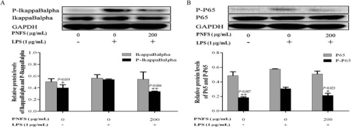 PNFS significantly inhibited the activation of LPS-stimulated NF-kappaB signaling pathway in RAW264.7 macrophages. a PNFS inhibited the IkappaBalpha activation in LPS-stimulated RAW264.7 macrophages. b PNFS inhibited the P65 activation in LPS-stimulated RAW264.7 macrophages. Data of the production of P-IkappaBalpha, total IkappaBalpha, P-P65 and total P65 were all expressed as the mean (SD) of 3 independent experiments. One-Way ANOVA test was used to analyzed the data and the results were F = 11.172; P = 0.009, F = 0.146; P = 0.867, F = 8.793; P = 0.016 and F = 0.062; P = 0.941, respectively. Then, data of the production of P-IkappaBalpha, total IkappaBalpha, P-P65 and total P65 were all counted by SNK and LSD multiple comparisons to determine the statistical difference between two groups. The P values represented the statistical differences between each group and the corresponding positive control (without PNFS and with LPS treated). * means P < 0.05 and ** means P < 0.01