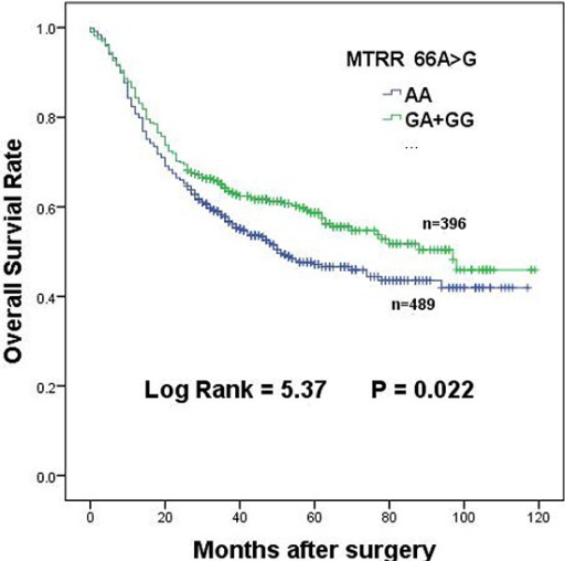 Overall survival of MTRR 66A > G dominant genotypes in gastric cancer patients