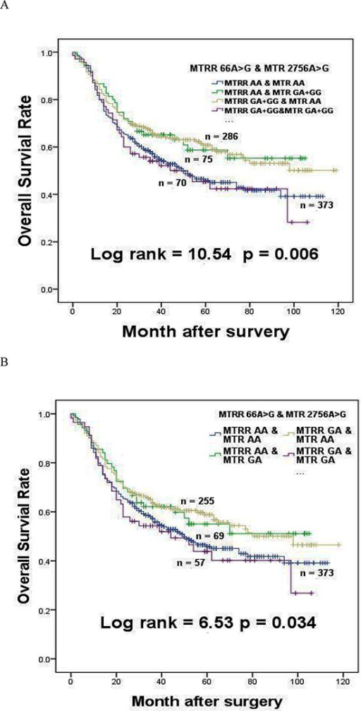 The effects of MTRR 66A > G interaction with MTR 2756A > G on survival of gastric cancer patients(A) The effect of MTRR 66A > G interaction with MTR 2756A > G in dominant model on the survival of gastric cancer patients. (B) The effect of MTRR 66A > G interaction with MTR 2756A > G in heterozygote model on the survival of gastric cancer patients.