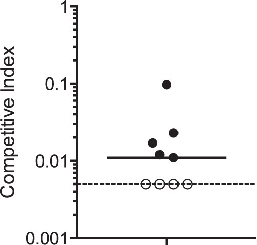CsrA is required for V. cholerae virulence in infant mice. The CsrA Arg6His point mutant NcsrA.R6H was competed against the wild-type strain N16961G. Five-day-old suckling BALB/c mice were inoculated intragastrically with an equal number of each competing strain as described in Materials and Methods. The competitive index (CI) was calculated by normalizing the output ratio to the input ratio of the two competing strains. Each data point represents one mouse, and the median CI (0.01) is represented by the solid horizontal line. A CI value below 1 indicates that the mutant is at a competitive disadvantage. The dotted line shows the limit of detection for the CI in this experiment, which was 0.005. In 4 out of 9 mice, the mutant was not detected during analysis of more than 200 recovered colonies, and thus the CI falls below the limit of detection. These data points are included in the analysis as having a value of 0.005, which is the most conservative estimate for the CI. The actual CI values are likely to be lower. The results were statistically significant (P < 0.05) by the Mann-Whitney nonparametric test.