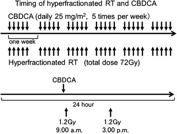 The schedules of concurrent chemoradiotherapy using hyperfractionated radiotherapy and carboplatin