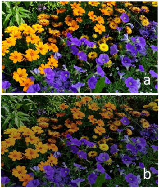 Effect of neutral density filter transmittance on the reference image: (a) reference image and (b) reference image affected by neutral density filter transmittance curve.
