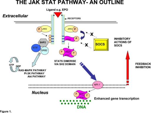 Diagram illustrating Functional JAK STAT PathwayThis    | Open-i