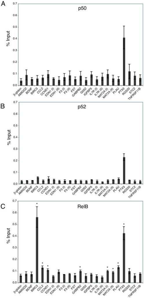 Analysis of NFκB binding sites in proliferating cells by chromatin immunoprecipitation. Chromatin fragments from proliferating T98G cells were immunoprecipitated with either anti-p50 (A), anti-p52 (B), or anti-RelB (C) antibody and quantified by real-time PCR. Data are presented as the percentage of input and are the means of 2 independent experiments with anti-p50 and anti-p52 or 3 independent experiments with anti-RelB ± S.E. β-globin was used as the negative control. In panel C, (*) represents statistically significant binding compared to β-globin (assessed by t-test).