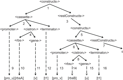 Parse tree showing the derivation process of a two-cassette genetic construct.In the derivation tree, terms in <> corresponds to the non-terminals in the grammar, while terms in [ ] are terminals, and the dashed lines indicate the transformation to terminals. The subscripts are used to distinguish different instances of the same category.