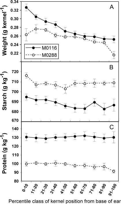 The effect of ear decile position on individual kernel dry weight (A), and the concentrations of starch (B) and protein (C) along the ear for two IBM RILs with contrasting concentrations of starch and protein. The RIL M0116 is shown as closed circles, and M0288 as open circles. Data are the means ±1 SE (n=9). As determined by two-sample t test, RILs were significant (P <0.001) for all comparisons, and the percentile class difference was significant (P <0.001) for weight, starch, and protein concentration.