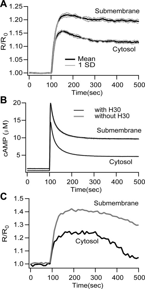 The theoretical FRET signal and cAMP concentration show microdomains without diffusional barriers.(A) The FRET signal for the submembrane region is 6.8% higher than the cytosol. Mean (black traces) and ±SD (gray traces, n = 5). (B) Difference between submembrane and cytosolic cAMP concentration is similar to that observed for the FRET signal, and is independent of overexpression of the H30 sensor. The model cell with H30 is shown in black; the model cell without H30 is shown in gray. SD traces are not illustrated because they overlap with the mean. No diffusional barriers are present for these simulations. The expression of the sensor does not disturb the cAMP microdomain, therefore the difference between submembrane FRET and cytosolic FRET is not an artifact of the method. (C) Representative kinetics of FRET changes recorded in cells expressing either the membrane targeted sensor mpH30 or the cytosolic sensor H30 [16], [56] upon stimulation with 1µM PGE1. FRET experiments were performed as described previously in [16].