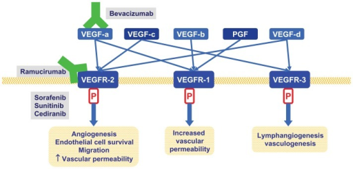 Relevant anti VEGF pathways therapies in advanced gastr | Open-i