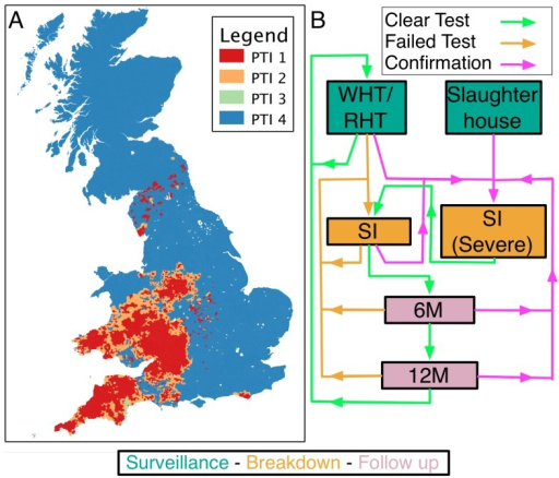 "Parish Testing Intervals (PTI) for bTB in GB (2003–2005).Routine surveillance for bTB in GB is based upon the regular (SICCT) testing of herds at a frequency determined by the local incidence of affected premises. Panel (A) maps the shortest recorded PTI for each parish over our study period of 2003–2005. High incidence areas are spatially clustered with the greatest incidence, and thus intensity of testing, in the south-west of England and south Wales. PTI therefore offers a crude categorization of herds according to epidemiological risk, past history of testing and to a lesser extent, geographical location. In contrast to surveillance testing, the sequence of tests (B) following a breakdown are dependent only on the outcome of tests on the affected premises. A failed surveillance test leads to a sequence of short interval tests (SI) at intervals of at least 60 days. Confirmation of infection, through isolation of M. bovis or evidence of visible lesions at slaughter, leads to tests being re-interpreted under a ""severe"" interpretation of the SICCT, until one test is passed; testing then continues until an additional test at the standard interpretation is passed. After a breakdown is cleared follow-up tests are scheduled at intervals of at least 6 and 12 months, after which testing frequency reverts to the local parish testing frequency."