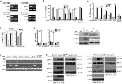 IL-35 mediates its biological effects on B-cells by activating STAT1 and STAT3 pathways through an IL-35 receptor comprising of IL-12Rβ2 and IL-27Rα(a) WEHI-279 B-cell line were transduced with control siRNA or IL-12Rβ1-, IL-12Rβ2-, IL-27Rα- or gp130-specific siRNA and after 3 days total RNA was analyzed by RT-PCR. (b, c) siRNA-treated B-cells were cultured in medium containing pMIB or rIL-35 for 3 days and B-cell proliferation (b) or rIL-35-induced production of IL-10 (c) was assessed by [3H]-thymidine incorporation assays or ELISA, respectively. (d, e) Primary B cells from WT, IL12Rβ2KO or IL27RαKO mice were stimulated by LPS in the presence of pMIB or rIL-35 and analyzed by [3H]-thymidine incorporation assay (d) or intracellular cytokine IL-10 staining assay (e). (f) WEHI-279 cells were cultured overnight in medium containing rIL-35 and co-expression of IL-27Rα and IL-12Rβ2 was detected by Western blotting and immunoprecipitation using anti-IL-27Rα anti-Ebi3 or control isotype-specific IgG Abs. (g) Primary B cells were transduced with IL-12Rβ1-, IL-12Rβ2-, IL-27Rα-, gp130 or both IL-12Rβ2- and IL-27Rα-siRNA. The cells were then stimulated in presence of pMIB or rIL-35 and expression of p35 and Ebi3 was detected by RT-PCR analysis. (h, i) Primary T cells (h) or B cells (i) from WT C57BL/6 mice were stimulated with anti-CD3/CD28 or LPS, respectively, and cells were then washed and starved for 2 h in serum free medium (0.5% BSA). Cells were then stimulated for 30 minutes with pMIB, rIL-35 or IL-12 and analyzed for STAT activation by Western blotting. Data represent at least 3 independent experiments (*P<0.05; **P<0.01; ***P < 0.001; ****P<0.0001).