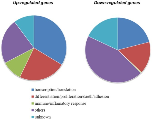 Distribution of up- and down- regulated [Na+]i/[K+]i-sensitive genes listed in Tables 2 and 3 among major functional categories.