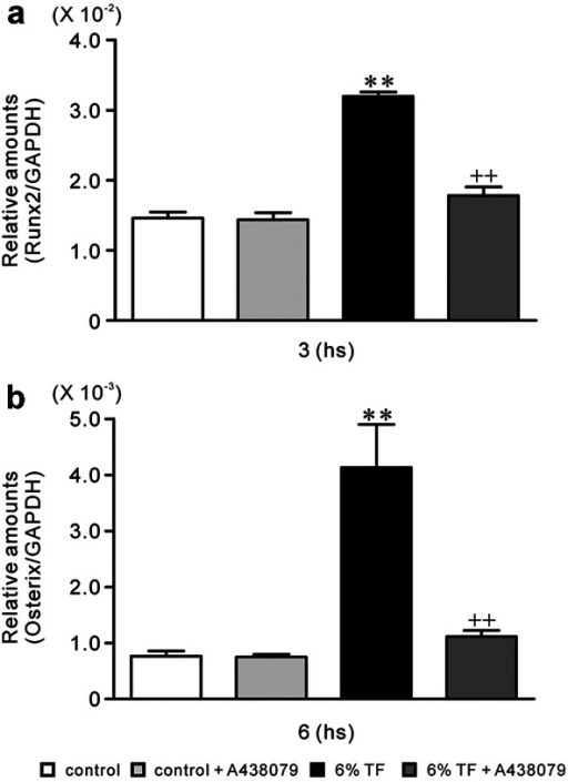 Effects of A438079 and/or 6% TF stimulation on gene expression of Runx2 and Osterix. Cells were cultured with or without 6% TF stimulation in the presence or absence of A438079 (10 μM). The mRNA expression of Runx2 (a) and Osterix (b) was determined using real-time PCR at hours 3 or 6 of culture, respectively. Data are shown as the mean ± SEM, n = 3 independent experiments.*P < 0.05, **P < 0.01, TF stimulation vs. control, ++P < 0.01, 6% TF stimulation vs. 6% TF stimulation + A438079.