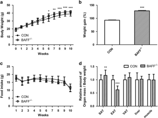 Animal model. Seven-week-old male C57BL/6J mice (n=21 per group) were fed a high-fat diet (HFD) (60% fat) for 10 weeks to induce obesity. Body weight and food consumption were monitored once per week. (a) Body weight gain in control/BAFF−/− mice showed a significant difference. (b) Relative weight gain in control/BAFF−/− mice after 10 weeks of HFD feeding expressed as a percent change from initial weight. (c) Food intake in grams. (d) Relative organ weight in grams: (organ weight/body weight) × 100%. Mean values with letters are significantly different (*P<0.05, **P<0.01 and ***P<0.001) by Student's t-test. BAFF, B-cell-activating factor; CON, control; EAT, epididymal adipose tissue; SAT, subcutaneous adipose tissue; VAT, visceral adipose tissue.
