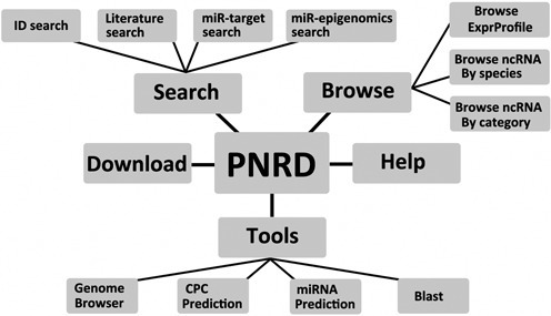 Structure of PNRD database, composed of five parts: Search section, Browse section, Tools section, Download page and Help page.
