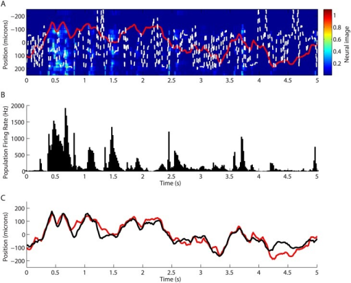 Decoding based on the neural image in the salamander retina.A: Neural image in response to the moving bar. Color plot: neural image of the ganglion cell's population activity at each point in time. White points: most likely position of the bar inferred from the peak in the neural image. Real trajectory in red. B: Population firing rate summed over all the cells as a function of time, for the same time window than A. C: Prediction of the bar's trajectory using the linear decoding (black); real trajectory (red).