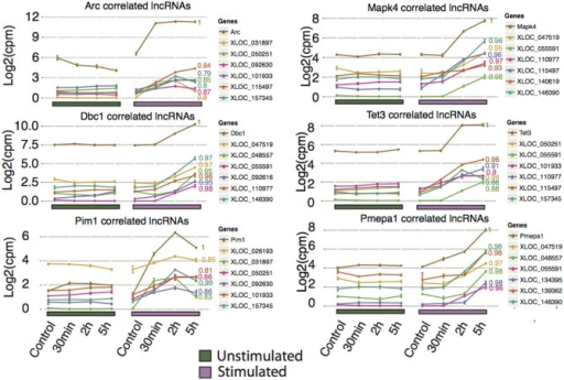 Novel rat lncRNAs correlated to highly differentially expressed Ensembl genes and Arc mRNA. The Ensembl genes chosen were those with the lowest FDR value for 2 and 5 h (no lncRNAs were identified at 30 min that showed high correlation to any Ensembl genes), and Arc. LncRNA with a neighboring Ensembl gene (from Figure 4C) were excluded from this analysis. The top 5 correlated lncRNAs with a p < 0.05 were plotted. Pearson correlation values are shown to the right of each line. Ensembl genes are colored brown and assigned a Pearson correlation value of 1, while the lncRNA are color-coded in each graph.