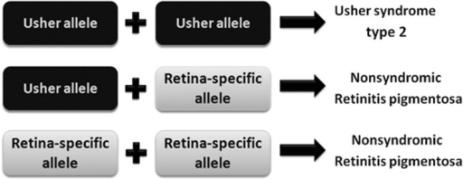 Schematic showing the proposed allelic hierarchy of USH2A mutations: the presence of at least one retinal disease-specific ('retina-specific') USH2A allele in a patient with USH2A-related disease results in normal hearing at least in childhood.