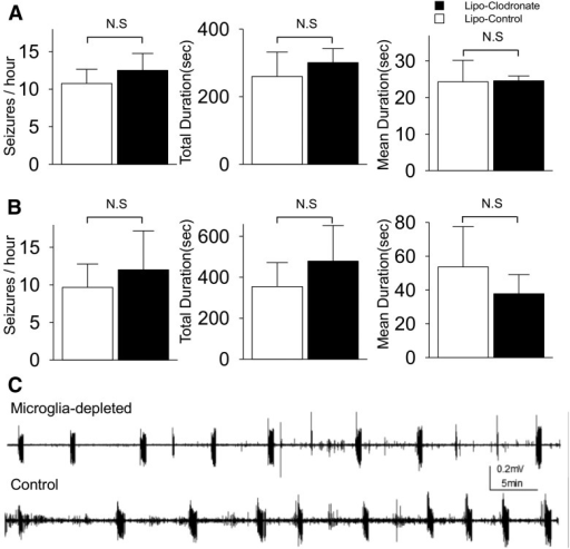 Effect of microglial depletion on epileptogenesis and ictogenesis in wild-type mice slices. A, Data was recorded at DIV6 after exposure of liposome clodronate from DIV0 to 6. B, Data was recorded at DIV12 after exposure of liposomal clodronate from DIV6 to 12. Microglial depletion did not alter the frequency, total duration, or mean duration of seizure-like activities (n = 4-5 per group). C, Representative traces recorded at DIV6 from microglia-depleted and control group, shows similar patterns of spontaneous seizure-like activities. All values are expressed as mean ± SEM. N.S, Not significant.