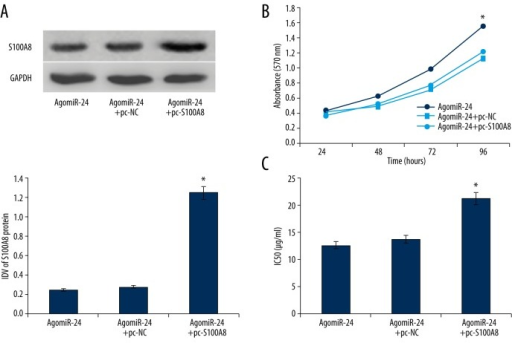 (A) Transfection of pc-S100A8 up-regulated the S100A8 expression silence induced by miR-24 enhancement (n=3). (B) MiR-24 enhancement advanced the cell viability of HEC-1A cells (n=5). (C) Up-regulation of miR-24 increased the IC50 of paclitaxel in HEC-1A cells (n=5). * P<0.05.