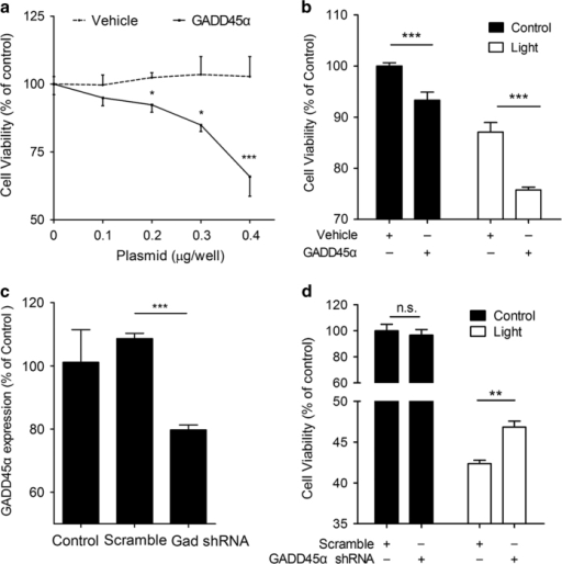 GADD45α stimulates apoptosis in ARPE-19 cells. (a) Overexpression of GADD45α in ARPE-19 cells resulted in a dose-dependent decrease in cell viability. Each point represents the mean value±S.E.M. (n=4, *P<0.05, ***P<0.001). (b) Overexpression of GADD45α significantly decreased cell viability, either with or without light damage. Each point represents the mean value±S.E.M. (n=4, ***P<0.001). (c) Knockdown of GADD45α in ARPE-19 cells using lentiviral delivery of shRNA. Results are given as mean value±S.E.M. (n=3, ***P<0.001). (d) Silencing GADD45α significantly reversed apoptosis in light-damaged RPE cells. Each value represents the mean value±S.E.M. (n=4, **P<0.01).