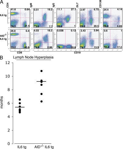 Characterization of IL-6 tg and AID−/− IL-6 tg mice. (A) Flow cytometry analysis of cells from hyperplastic lymph nodes from IL-6 tg and AID−/−IL-6 tg mice. Numbers indicate percentages of cells in a given quadrant. (B) AID accelerates the development of disease in IL-6 tg mice. IL-6 tg mice and AID−/−IL-6 tg mice were killed when they developed enlarged lymph nodes. The average time of death for IL-6 tg was 5.5 mo (n = 8) and 9.2 mo for AID−/−IL-6 tg mice (n = 8; P = 0.0001476 using a two-tailed Student's t test assuming unequal variance). Each point represents one mouse, and the black bars indicate the average time of death.