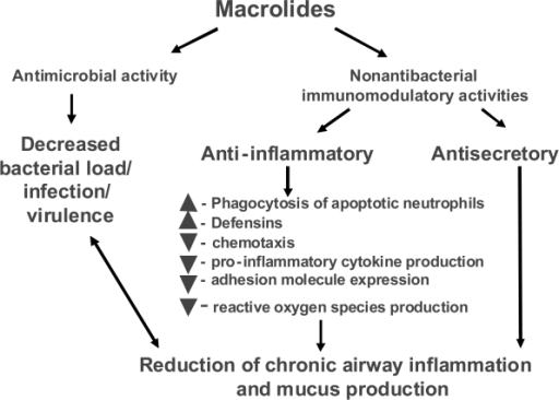 Potential beneficial effects of macrolides in COPD patient.
