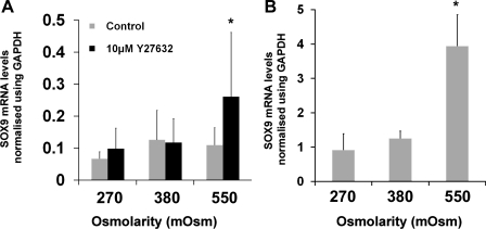 Effect of hyperosmolarity on SOX9 mRNA levels in passaged human articular chondrocytes (HAC). A: real-time PCR analysis of SOX9 mRNA levels in passaged HAC cultured under different osmotic conditions (given in mosM on x-axis) in the presence and absence of Y27632 (10 μM) for 5 h. Data presented were normalized using GAPDH expression and represent means and SDs from experiments conducted on cells from between 4 and 6 different donors. *Mixed-effects linear regression-interaction between hyperosmotic conditions and Y27632 (P < 0.05). B: real-time PCR analysis of SOX9 mRNA levels in passaged HAC cultured in alginate beads for 3 days in standard growth media before rinsing 3 times in serum-free DMEM and then cultured for 5 h in serum-free DMEM adjusted to 270, 380, or 550 mosM. Data are presented as means and SDs of expression values in HAC from 3 donors. *P < 0.05 vs. both 270 and 380 mosM, one-way ANOVA and Bonferroni post hoc test.