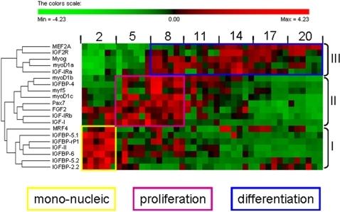 Transcriptional Gene Expression Gene Expression.heat Map
