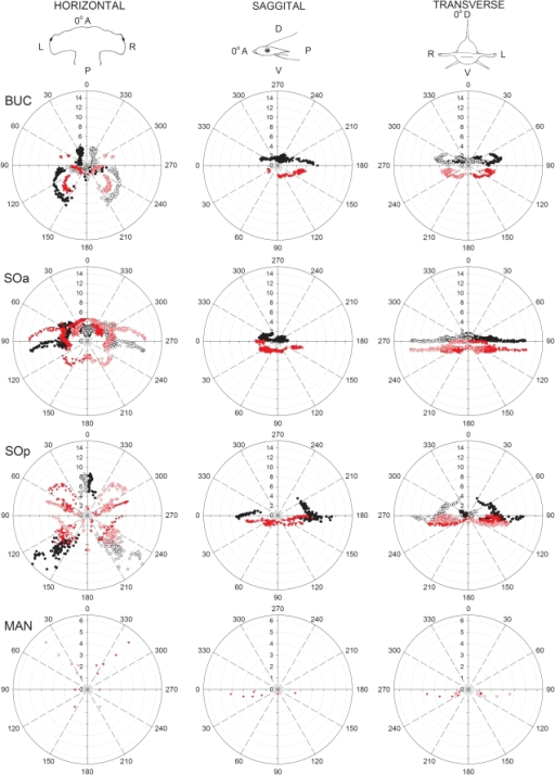 Polar plots of canal projections in three planes of the electrosensory ampullary array of the scalloped hammerhead shark, Sphyrna lewini.Plots show canal length (cm) vs. canal orientation angle in the horizontal, sagittal and transverse planes for each ampulla group (BUC  =  buccal; SOa  =  superficial ophthalmic anterior; SOp  =  superficial ophthalmic posterior; MAN  =  mandibular). Projections of ventral and dorsal canals are indicated with red and black symbols, respectively. Projections are shown for both left (filled symbols) and right (open symbols) ampullary clusters. Reference directions for each plane are horizontal: 0° =  anterior (A), 90° =  left (L), 180° =  posterior (P), 270° =  right (R); sagittal: 0° =  anterior (A), 90° =  ventral (V), 180° =  posterior (P), 270° =  dorsal (D); transverse: 0° =  dorsal (D), 90° =  left (L), 180° =  ventral (V), 270° =  right (R).
